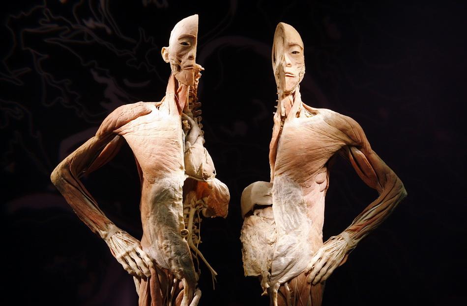 smotret-zhenskie-organizmi