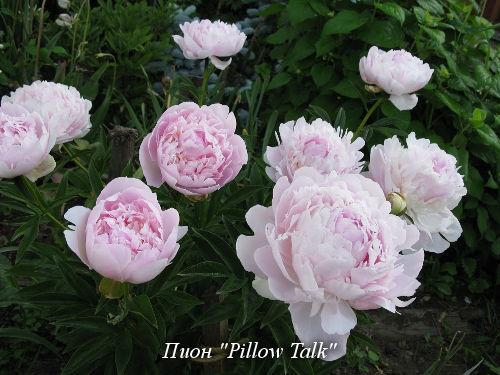 Pillow_Talk