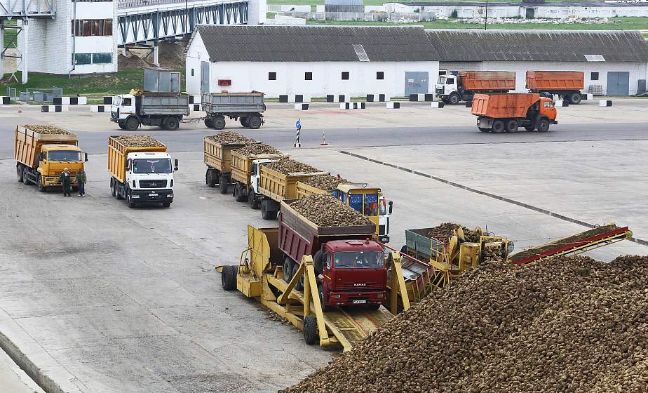 100 000 тонн сахара и экспорт даже за Кавказские горы. Скидельский сахкомбинат начал переработку свеклы нового урожая