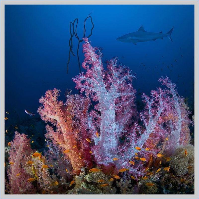 Подводный мир от Александра Мариничева