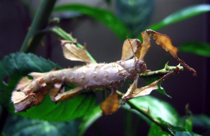 8 гигантских насекомых планеты (9 фото)