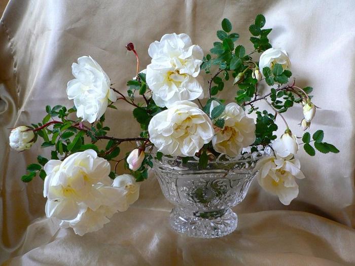 ёж, букеты цветов в хрустальной вазе фото кадре