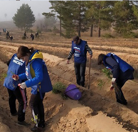Акция «Сохраним лес» стартовала в пяти районах Волгоградской области