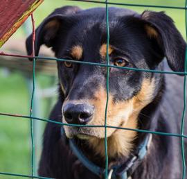 Акция в защиту животных из приютов «Лучший друг» охватит 21 регион страны