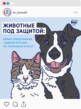 Животные под защитой: новые предложения «Единой России» по поправкам в КОАП