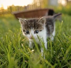 Правительство поддержало законопроект «Единой России» о запрете изымать домашних животных за долги