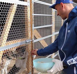 Активисты волонтерского центра «Единой России» передали корм в хабаровский приют для бездомных собак