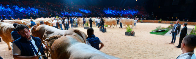 Animal competitions and conferences