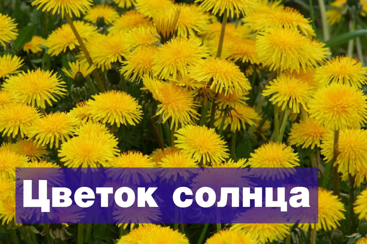 orioitittiginal_kopiya