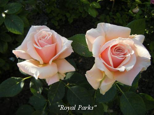 Royal-Parks