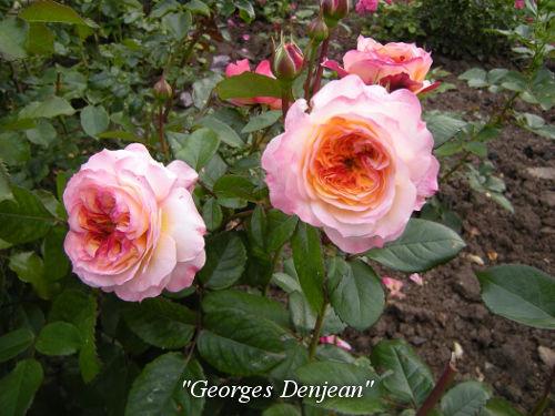 Georges-Denjean