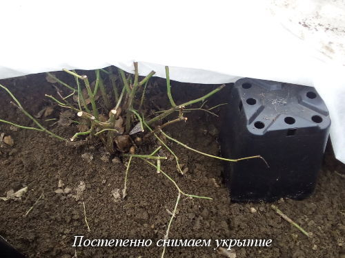 snimaem_ukritie