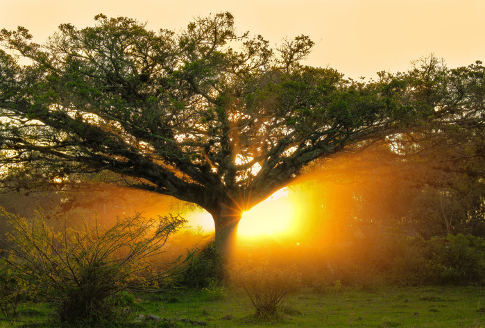 the_rebirth_of_light_by_john_peter-d6f57r9 (700x473, 492Kb)