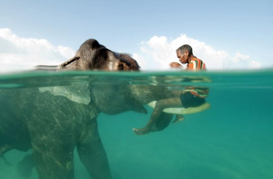 Удивительный мир слонов swimming-with-the-elephant