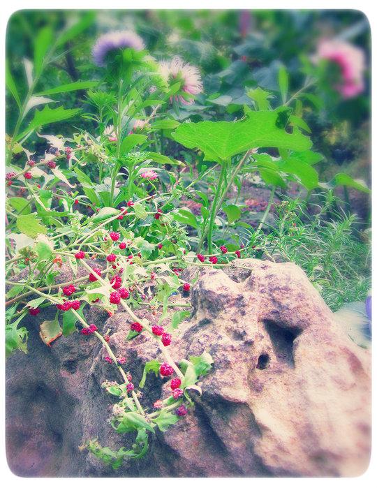 Садовые цветы и растения. - Страница 2 104966521_IMG_5924