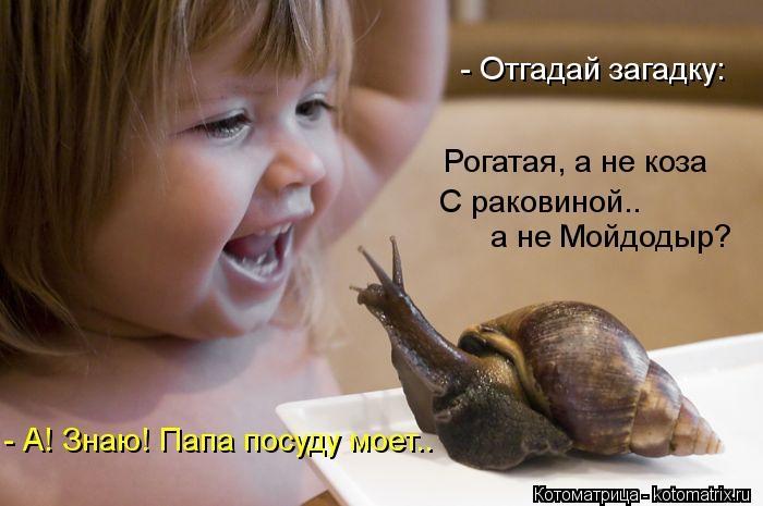 kotomatritsa_WD (700x465,  144Kb)