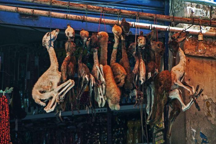Самые крупные колдовские рынки в мире (28 фото)