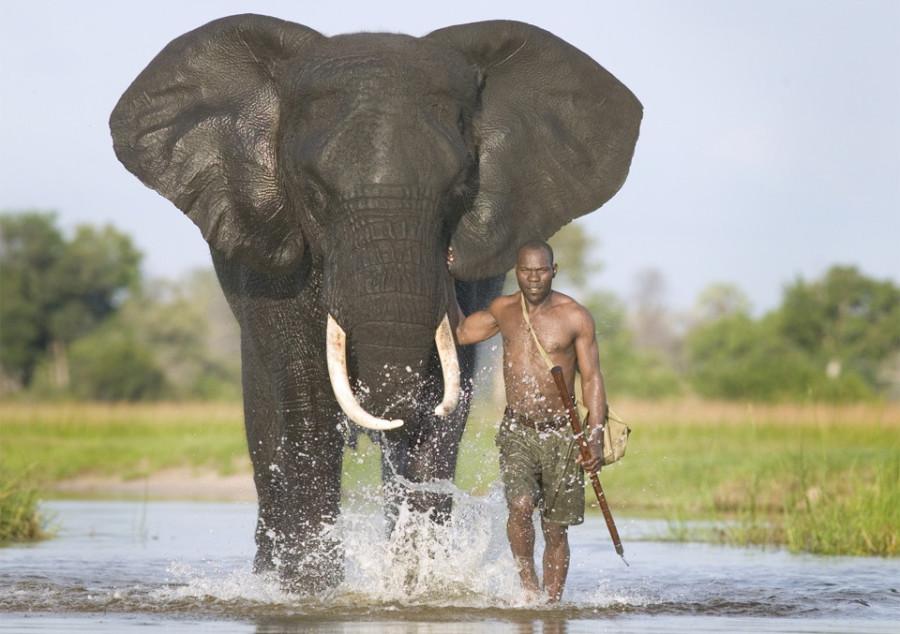 Удивительный мир слонов mahout-with-african-elephant