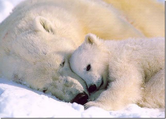 baby_animals_189