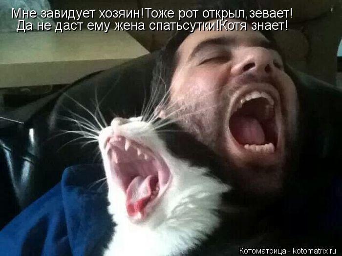 kotomatritsa_uD (700x525,  152Kb)