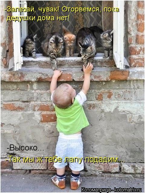 kotomatritsa_P (480x640,  212Kb)