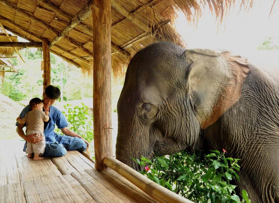 Удивительный мир слонов father-son-and-elephant