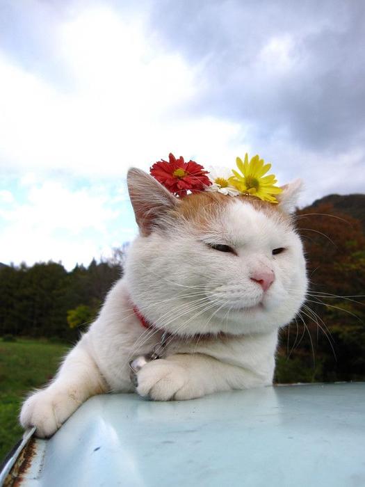 кошки и цветы2а (525x700, 252Kb)
