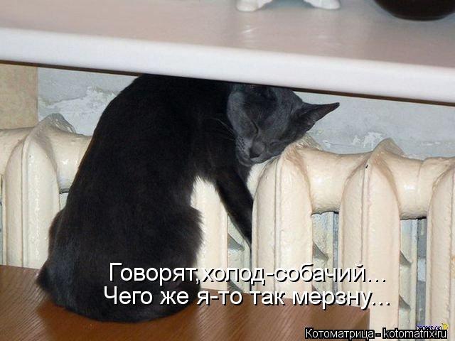 kotomatritsa_H (640x480,  137Kb)