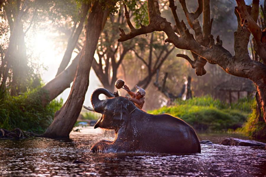 Удивительный мир слонов bathing-an-elephant