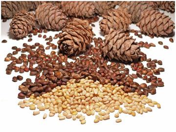 Скорлупа кедровых орех при геморрое