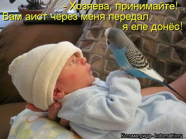 kotomatritsa_zF (604x453,  168Kb)