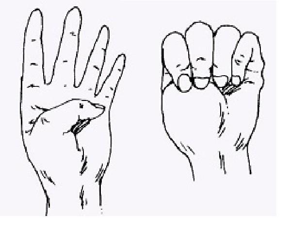 1. Для профилактики сердечно-сосудистых заболеваний и снятия напряжения после стресса Способность пальцев, медицина