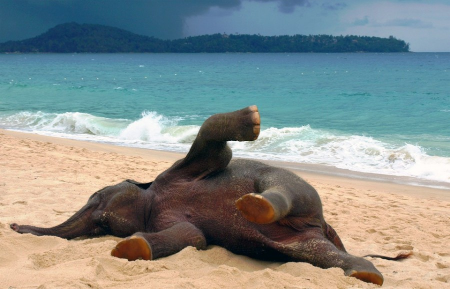 Удивительный мир слонов young-elephant-playing-at-the-beach
