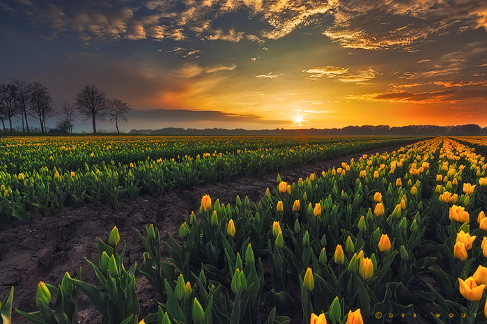 springscape_by_oer_wout-d65g7fc (700x465, 519Kb)