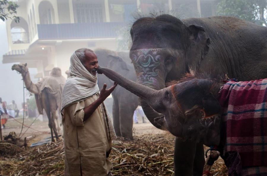 Удивительный мир слонов i-got-your-nose