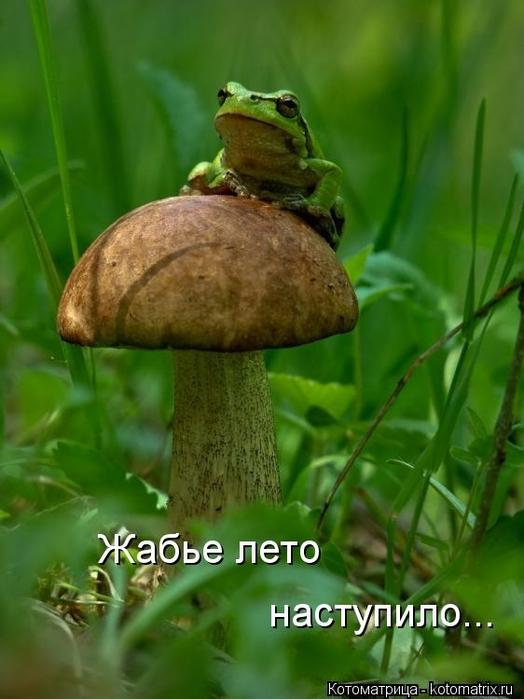 kotomatritsa_3 (524x700,  211Kb)