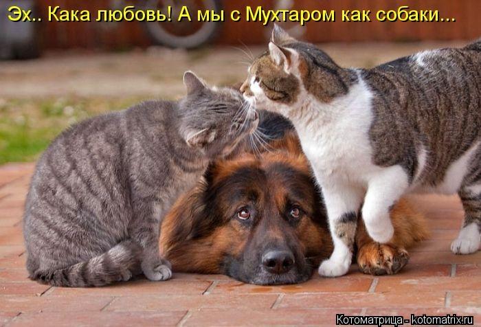 kotomatritsa_hi (700x476,  190Kb)