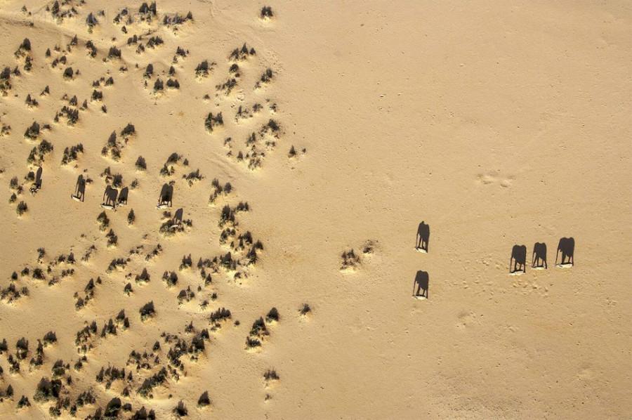Удивительный мир слонов elephant-shadows