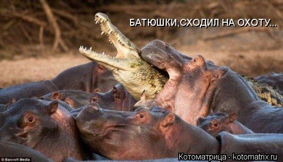 kotomatritsa_gr (570x327,  124Kb)