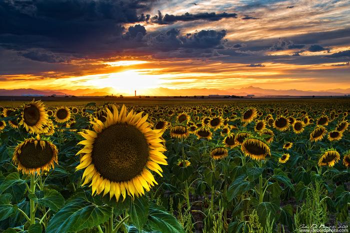 summer_guardian_by_kkart-d6coga7 (700x466, 619Kb)
