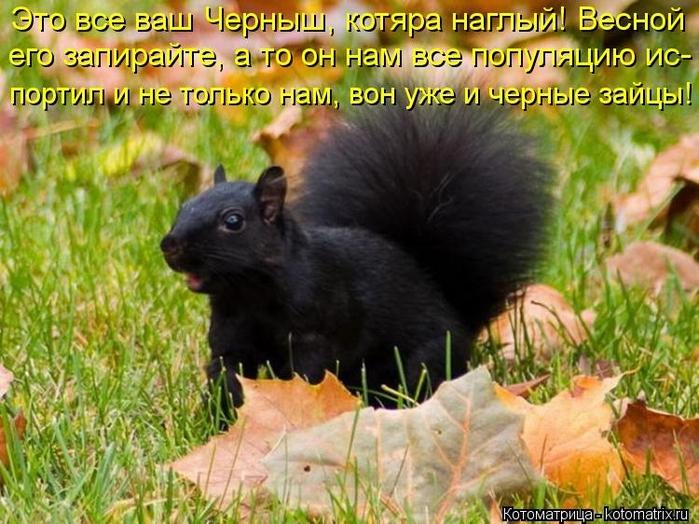 kotomatritsa_K (700x524,  301Kb)