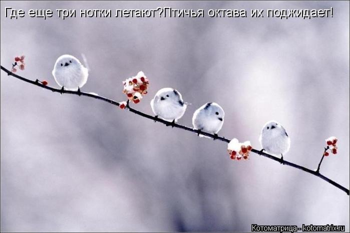 kotomatritsa_5c (700x466,  155Kb)